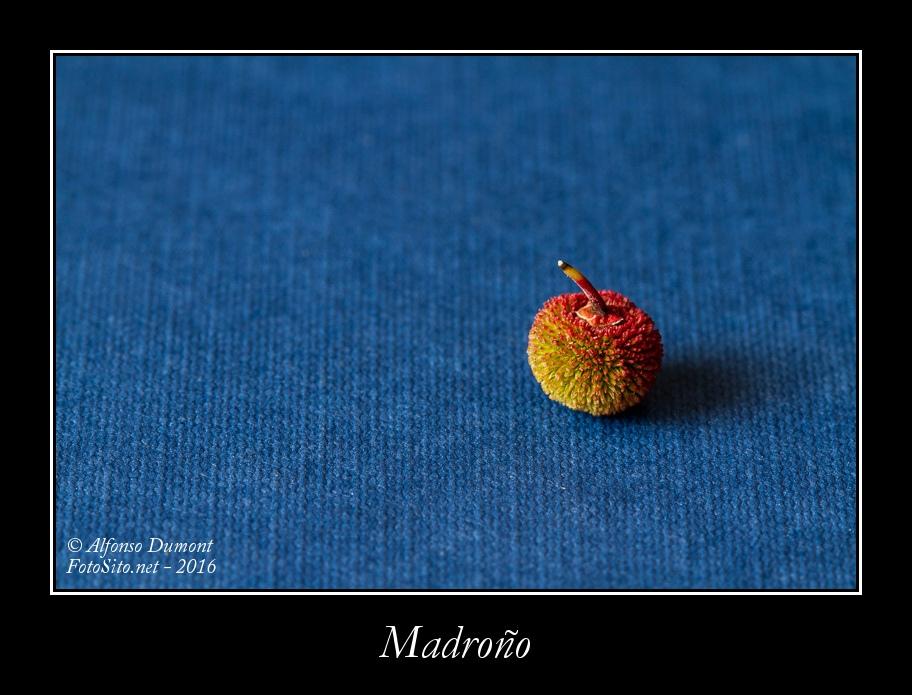 Madrono
