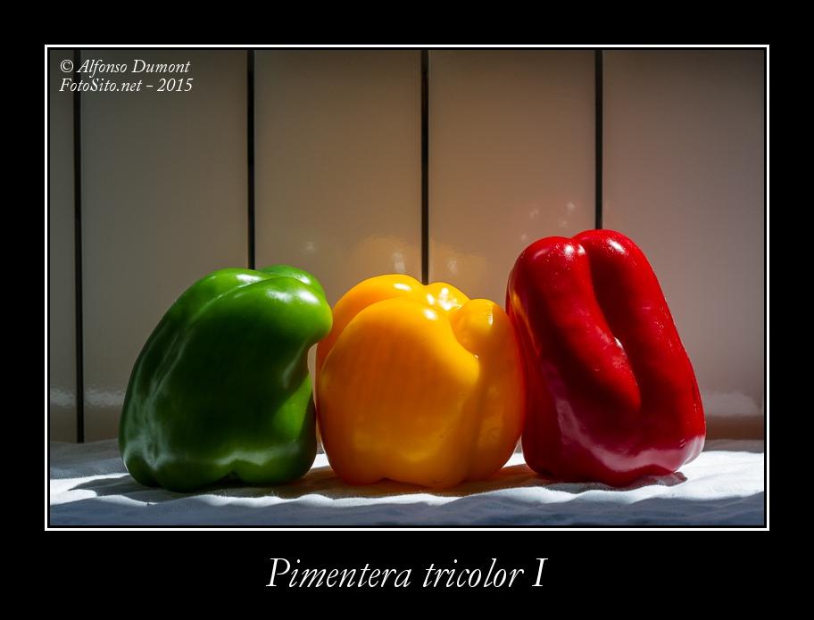 Pimentera tricolor I