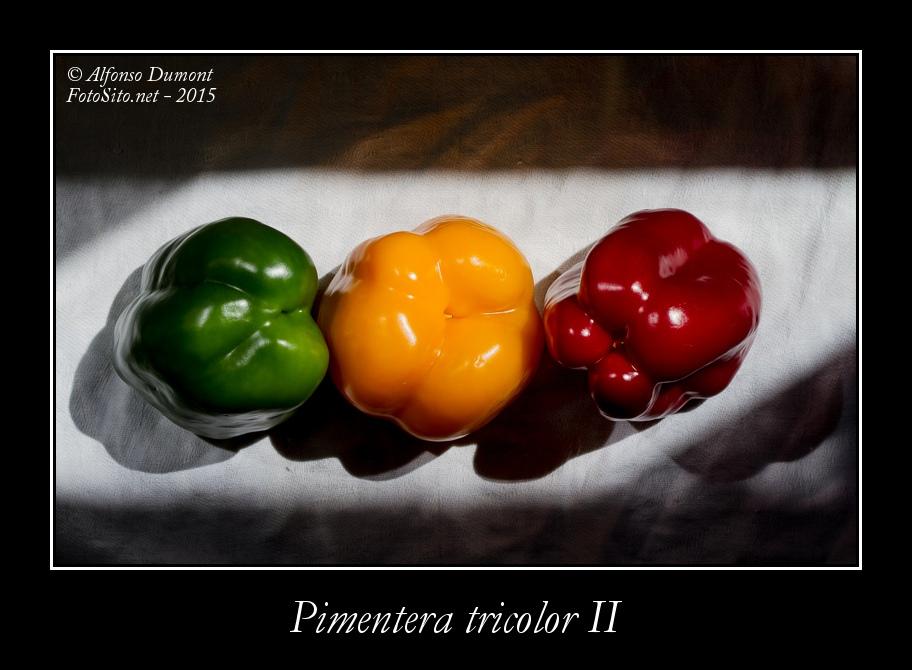 Pimentera tricolor II