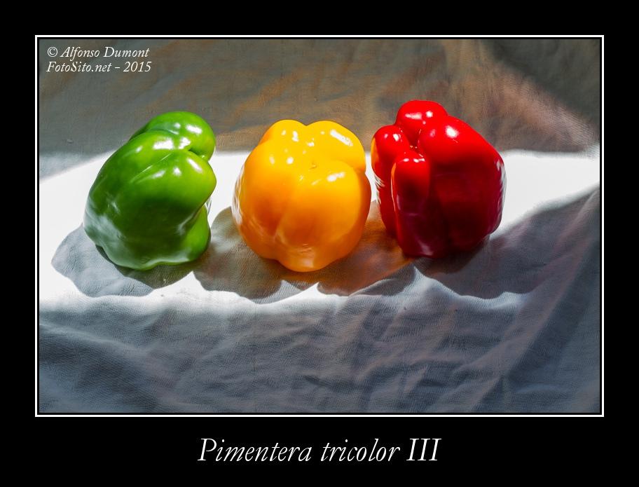 Pimentera tricolor III