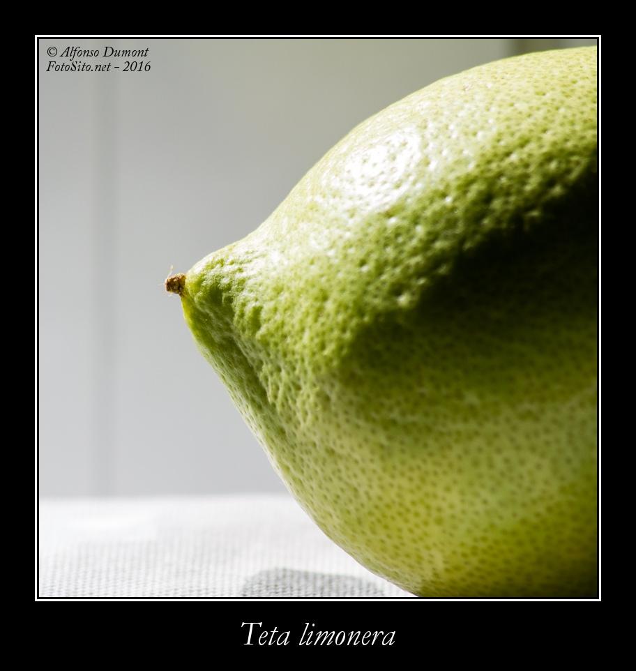 Teta limonera