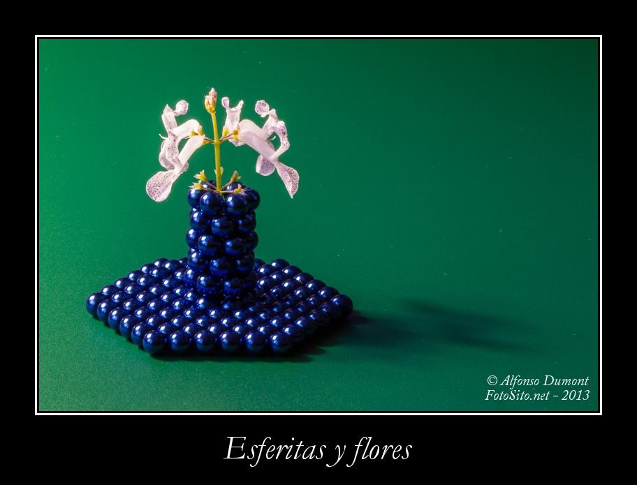 Esferitas y flores