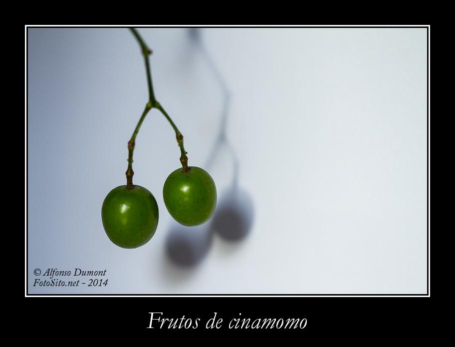 Frutos de cinamomo