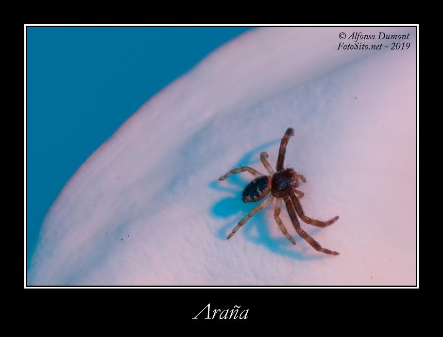 Arana