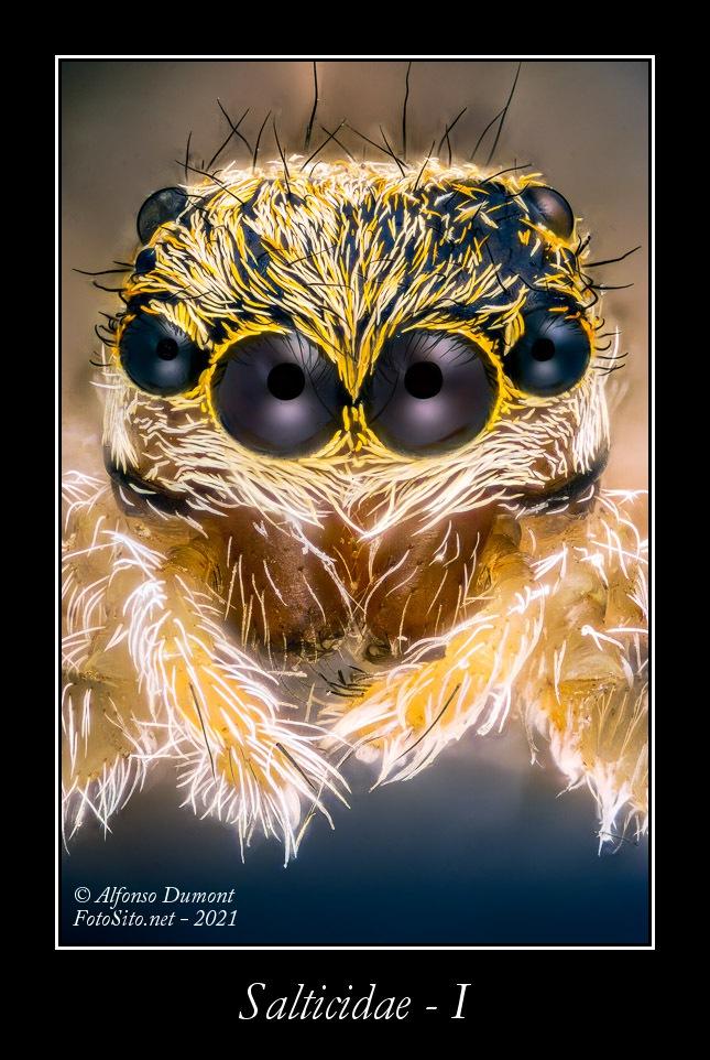 Salticidae I