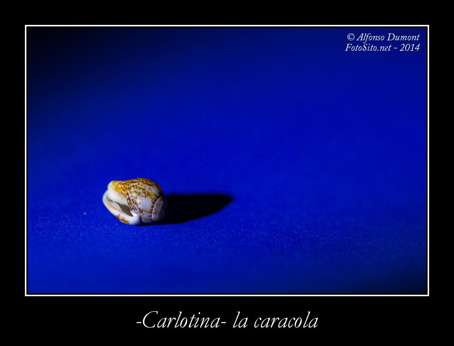 Carlotina la caracola
