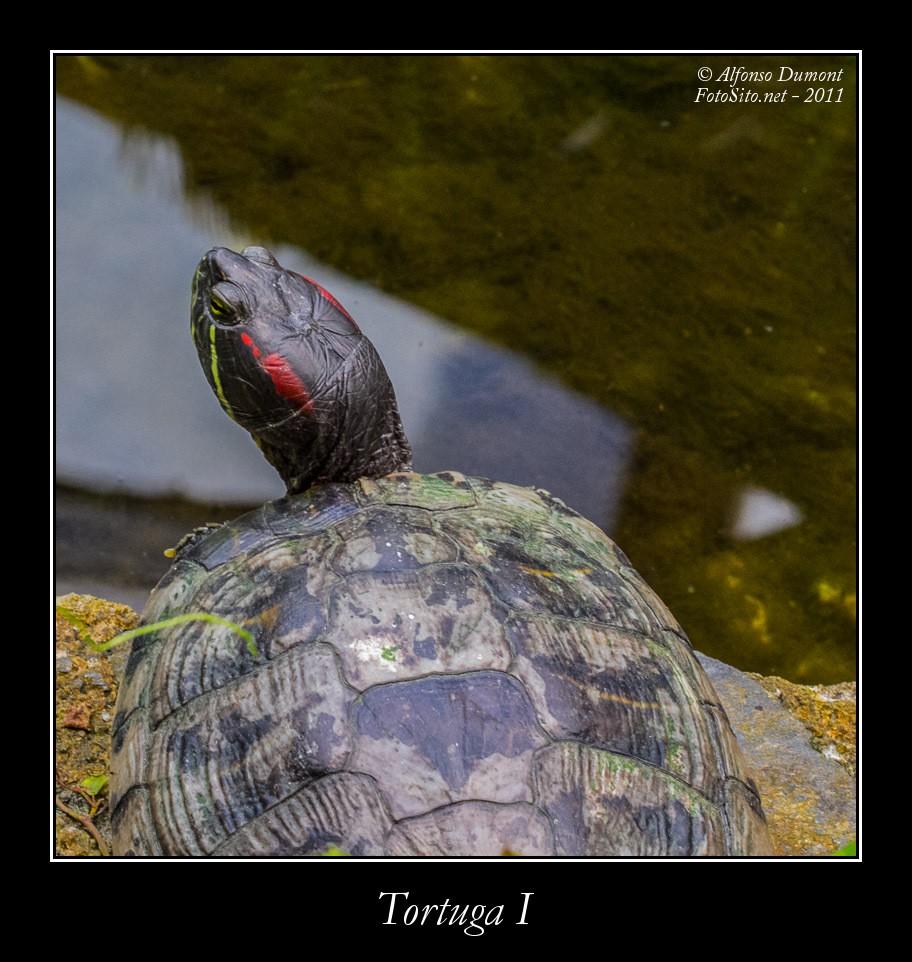 Tortuga I