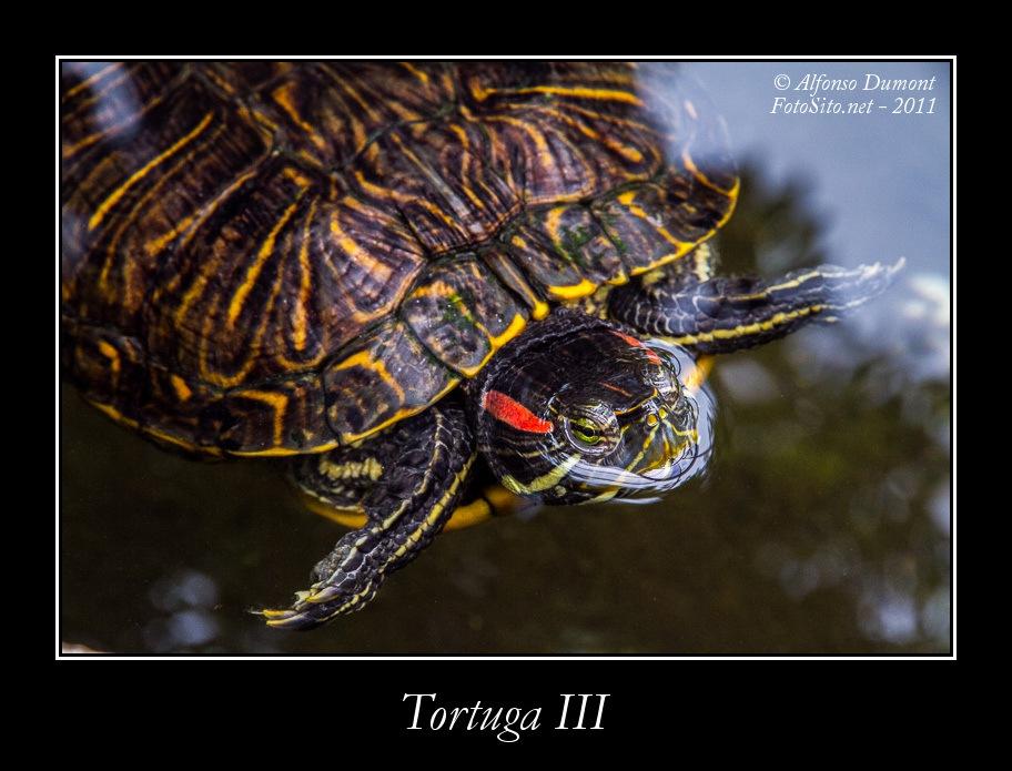 Tortuga III