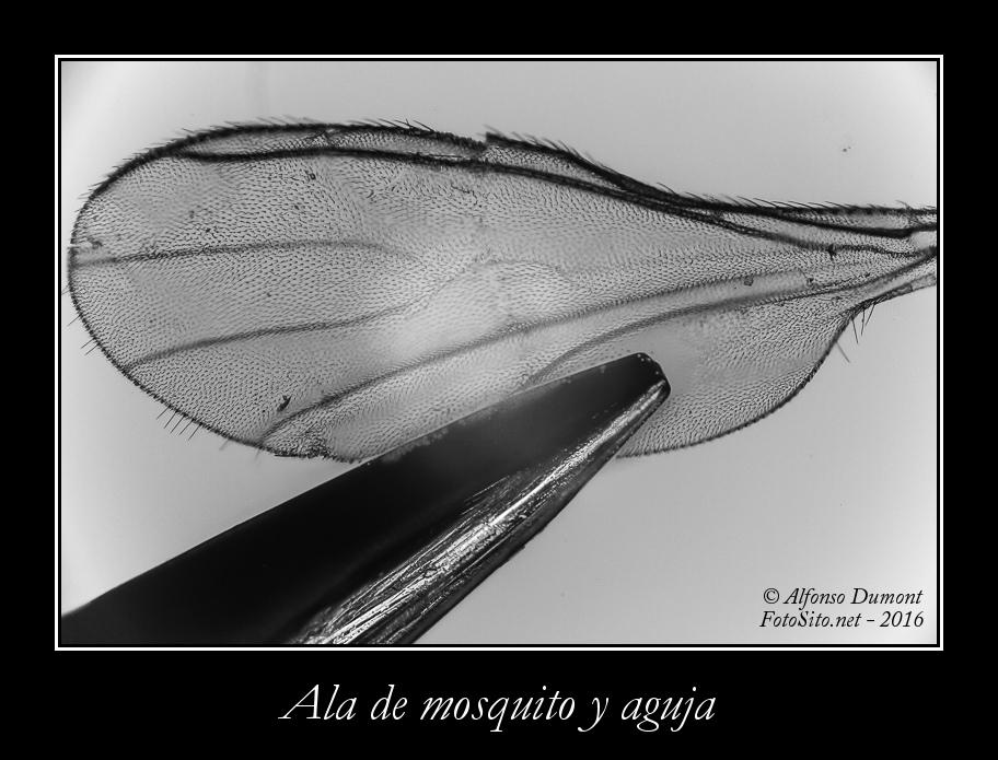 Ala de mosquito y aguja