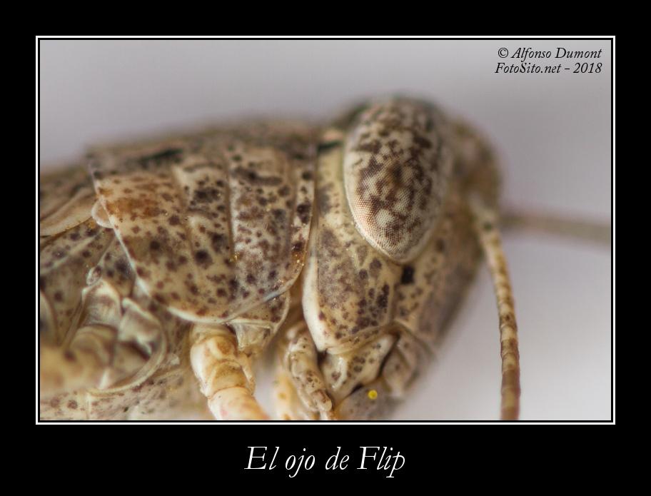 El ojo de Flip