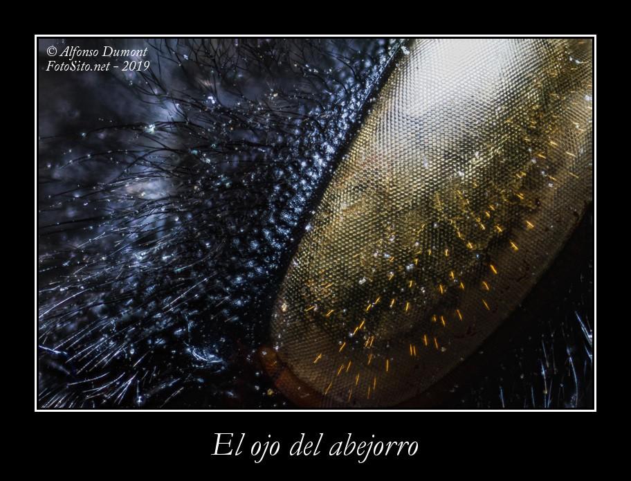 El ojo del abejorro