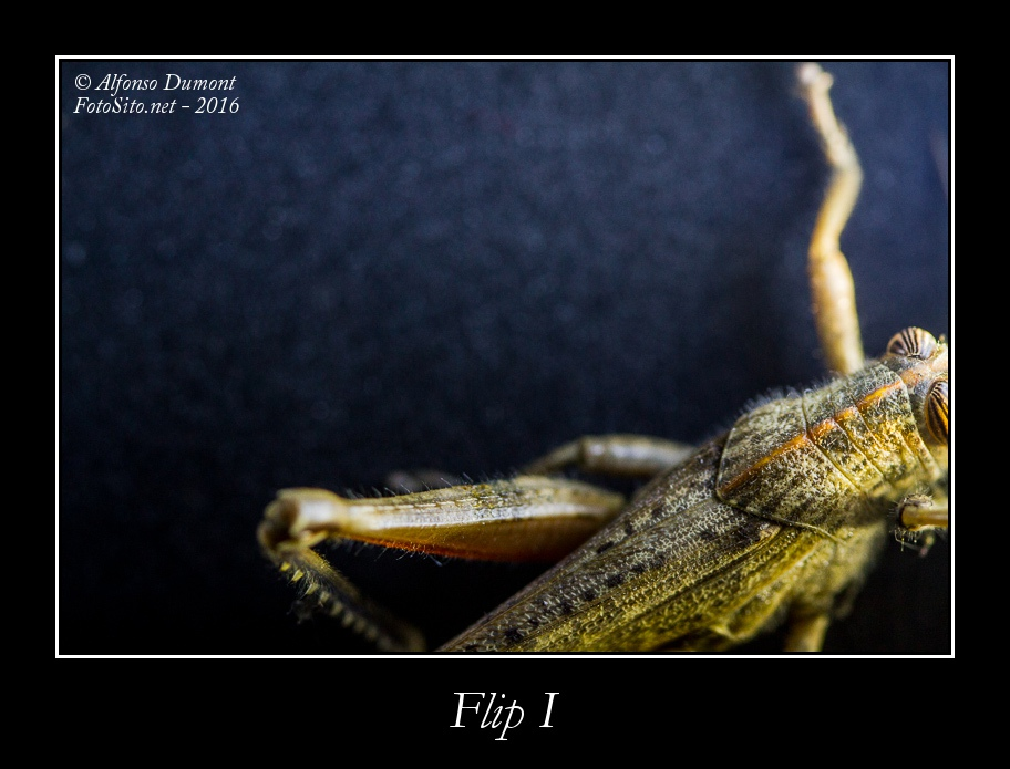 Flip I