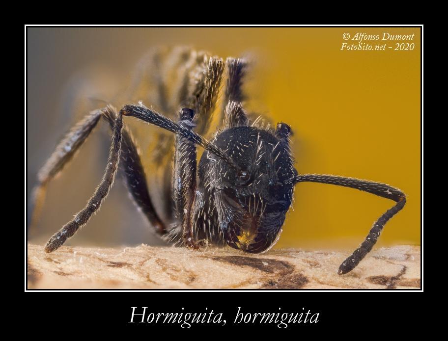 Hormiguita hormiguita