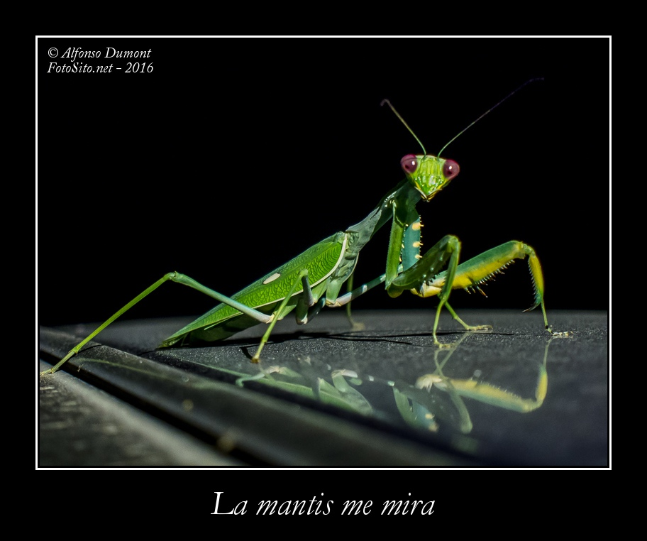 La mantis me mira
