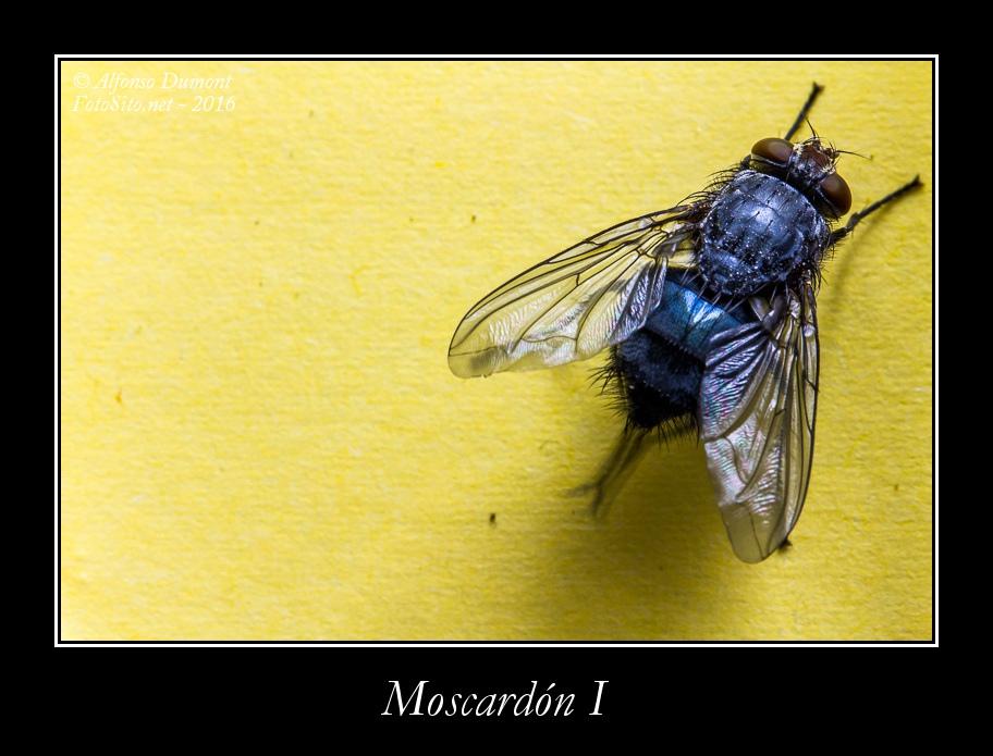 Moscardon I