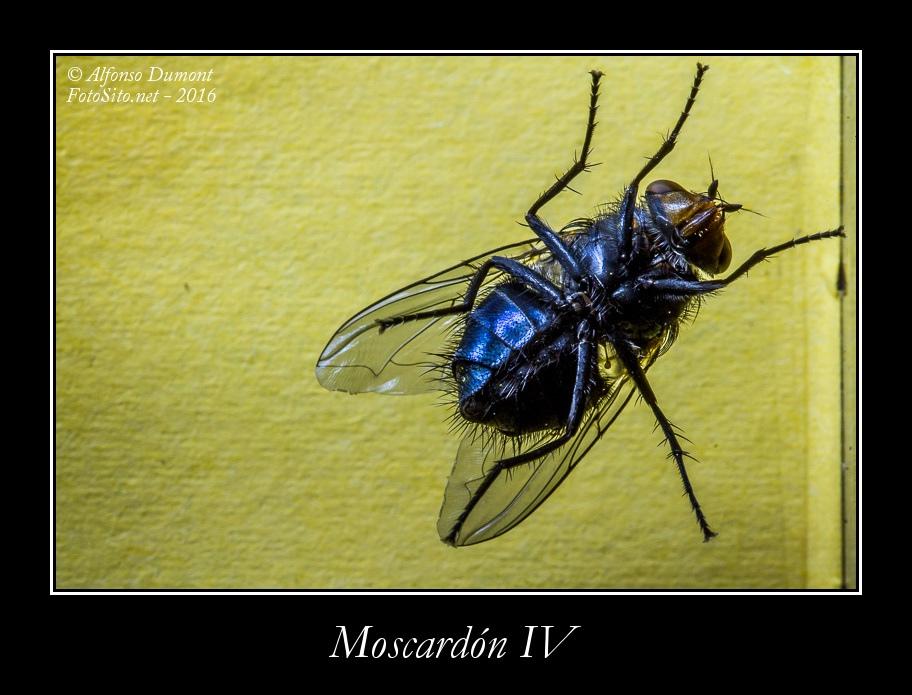 Moscardon IV