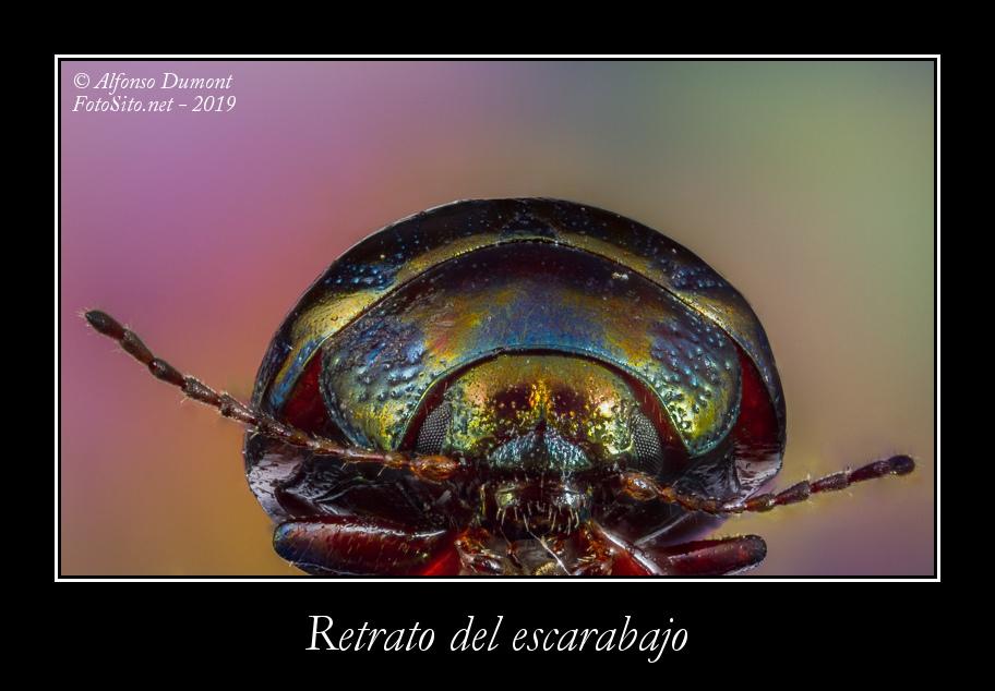 Retrato del escarabajo