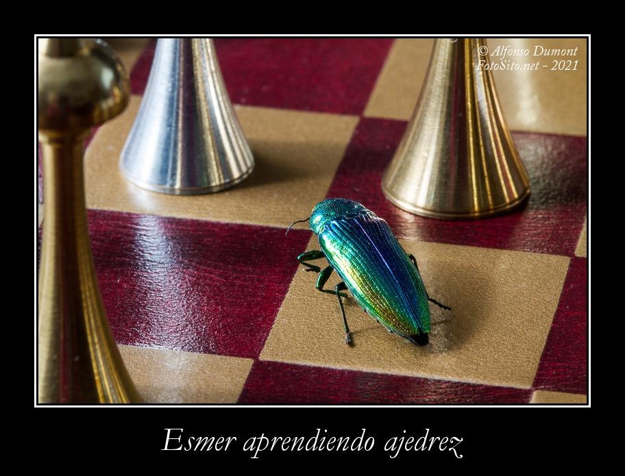 Esmer aprendiendo ajedrez