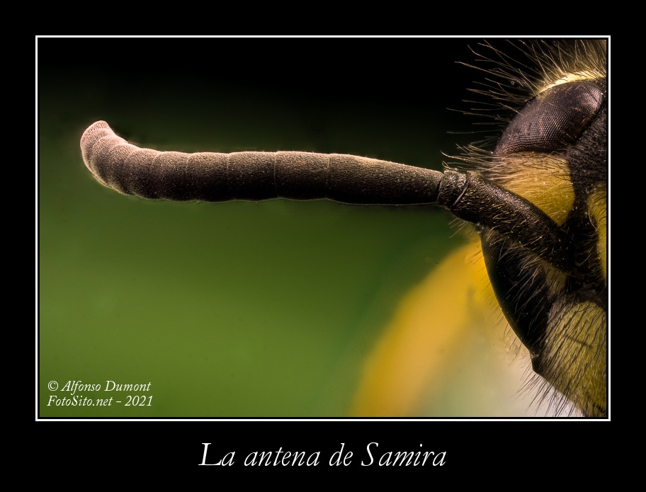 La antena de Samira