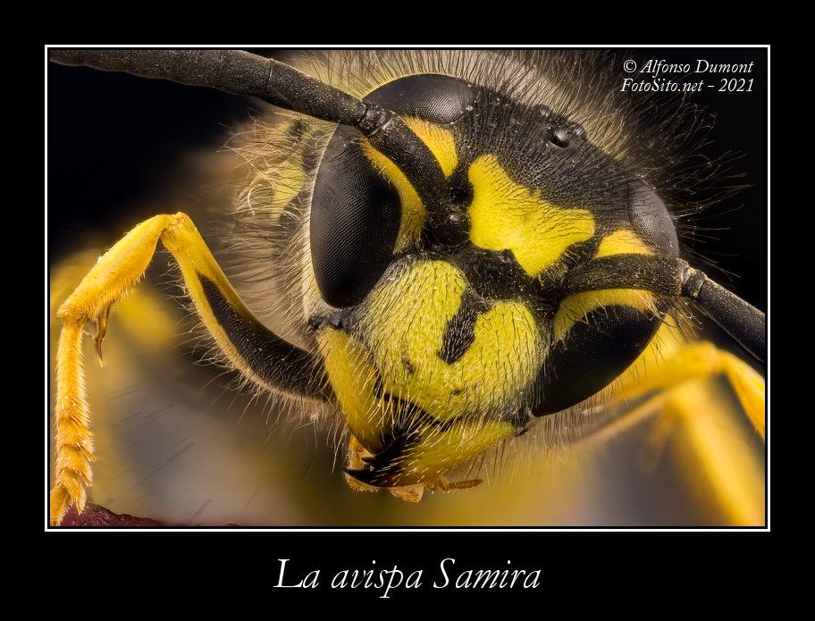 La avispa Samira