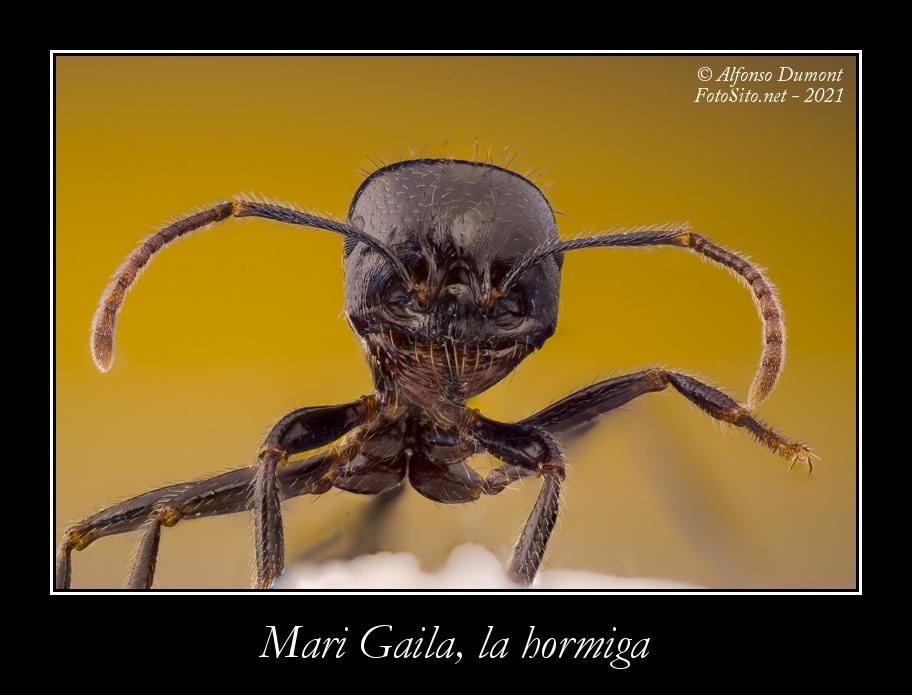 Mari Gaila la hormiga