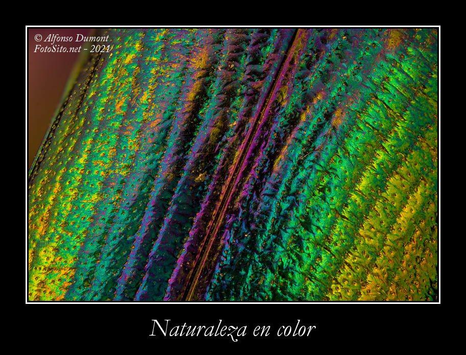 Naturaleza en color