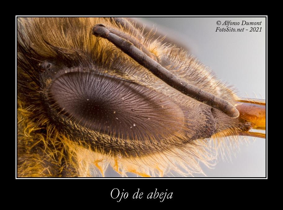 Ojo de abeja