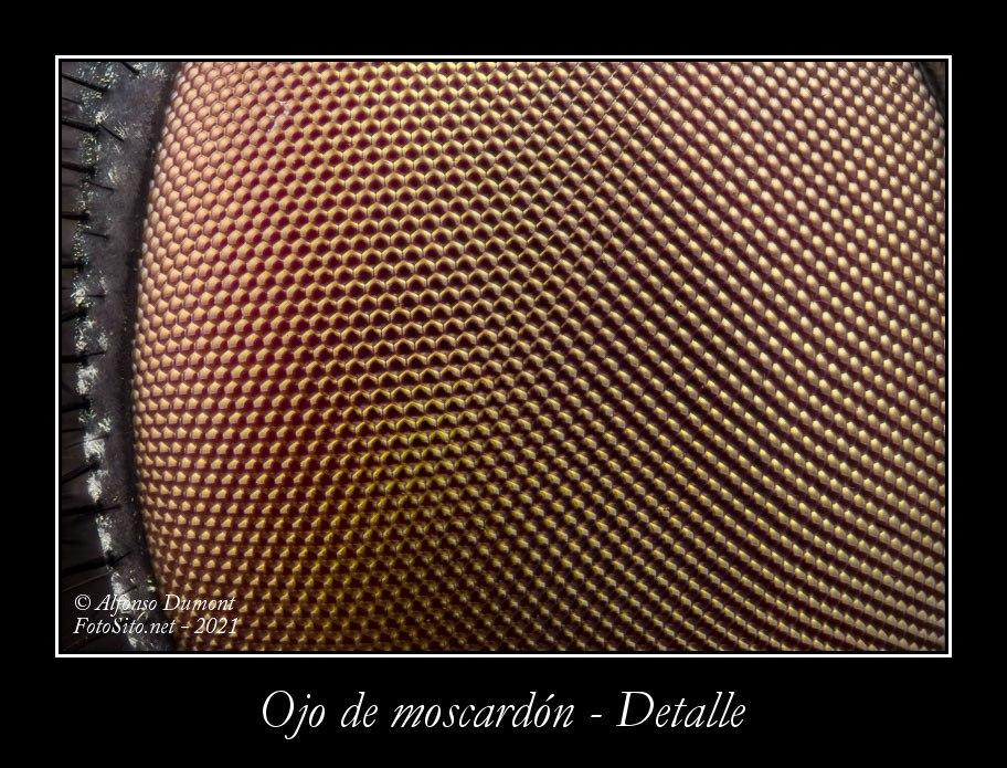 Ojo de moscardon Detalle