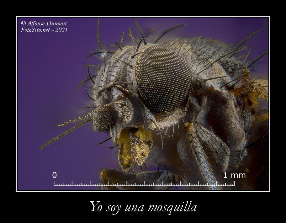 Yo soy una mosquilla