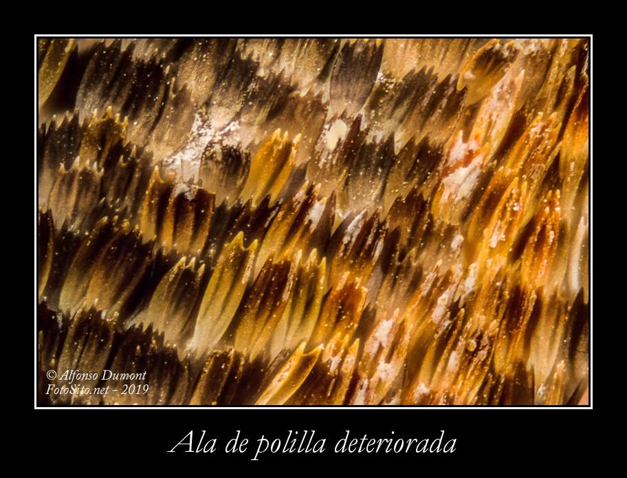 Ala de polilla deteriorada