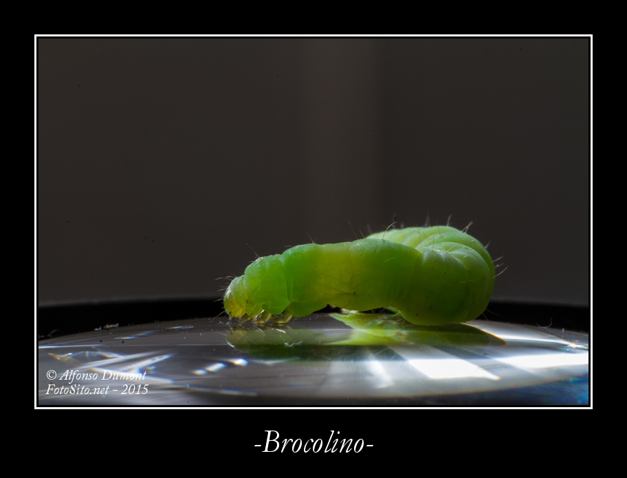Brocolino