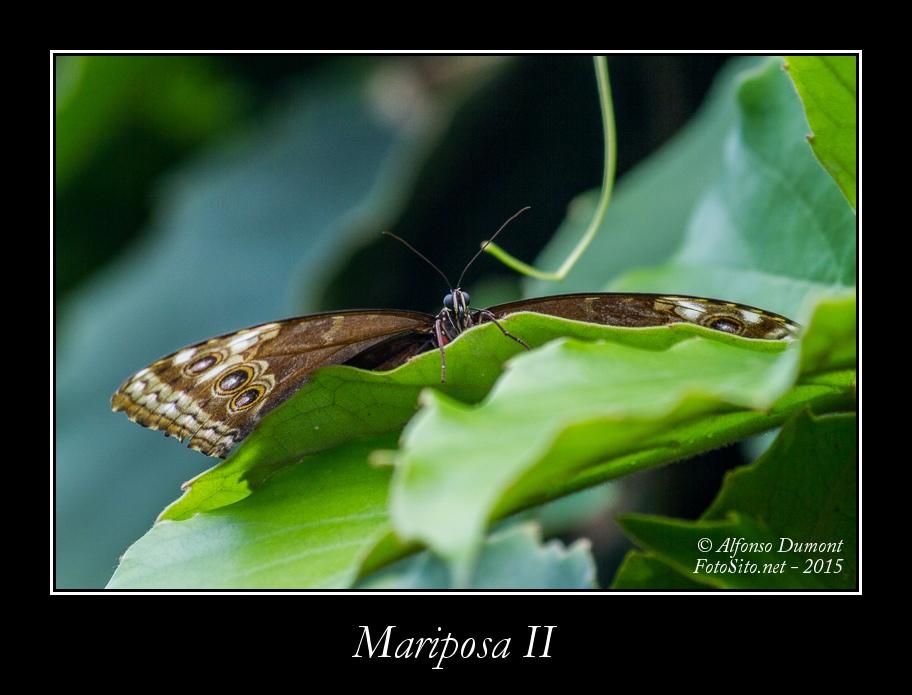 Mariposa II