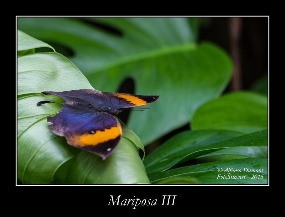 Mariposa III