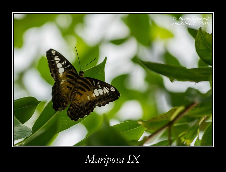 Mariposa IX