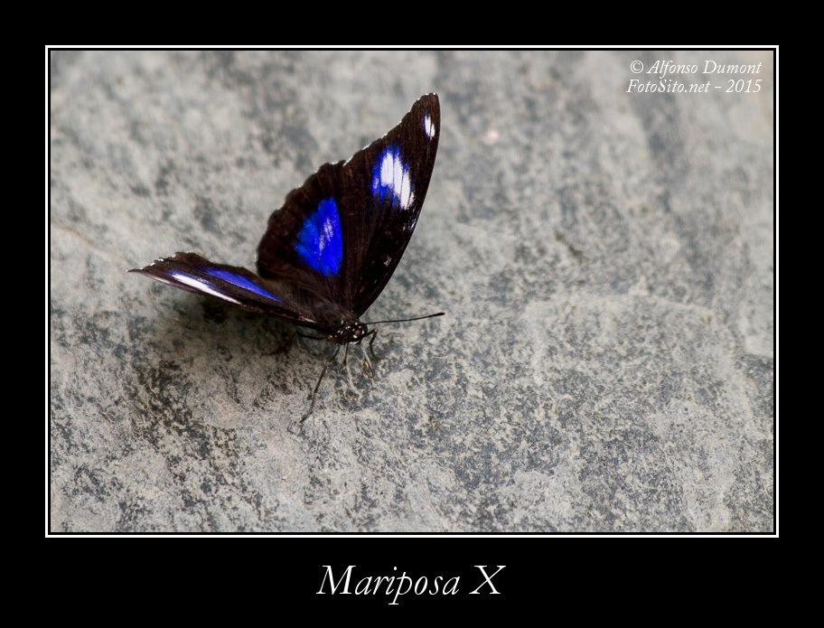 Mariposa X