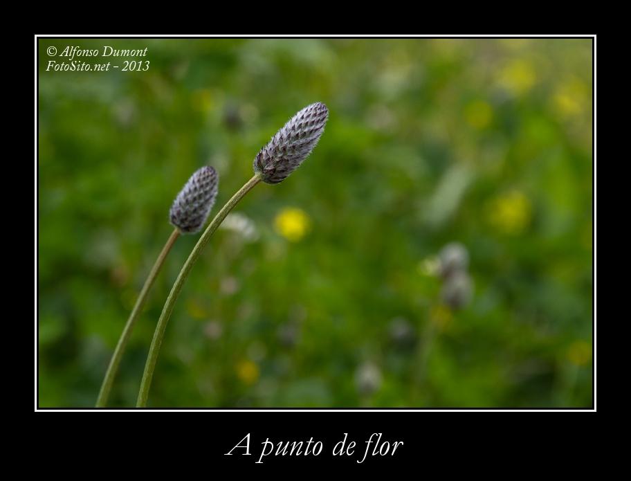 A punto de flor