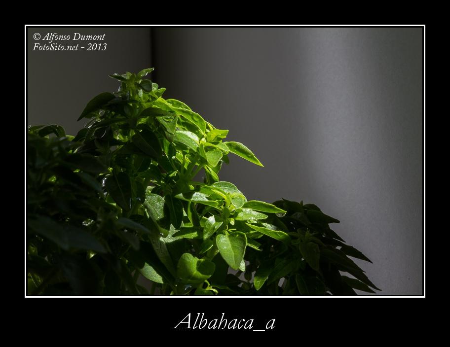 Albahaca a