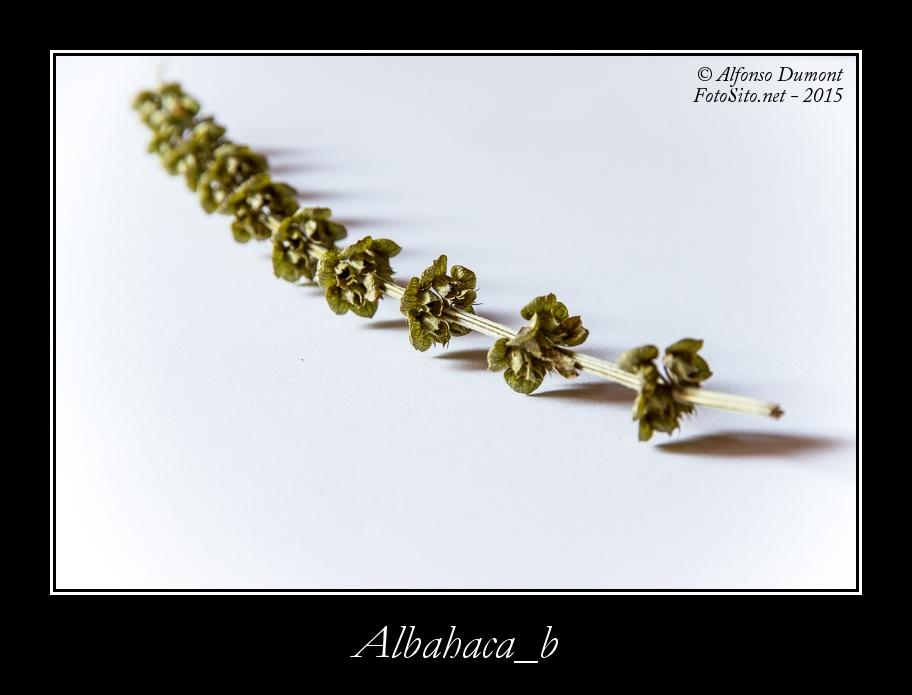 Albahaca b