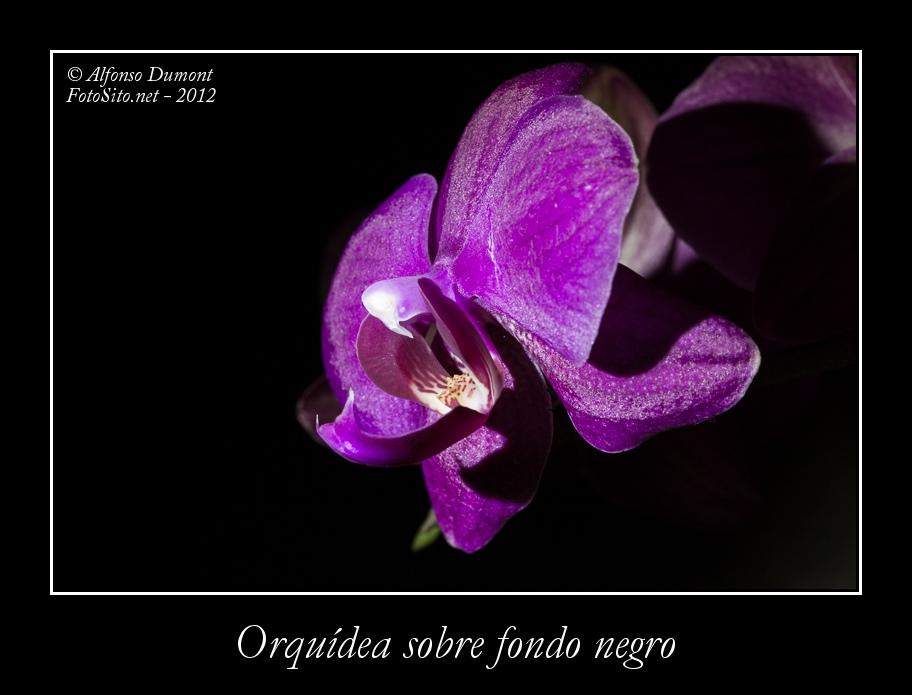 Orquidea sobre fondo negro