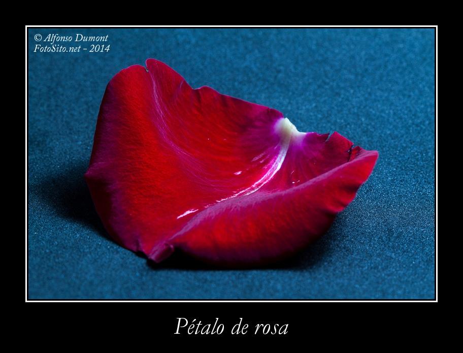 Petalo de rosa