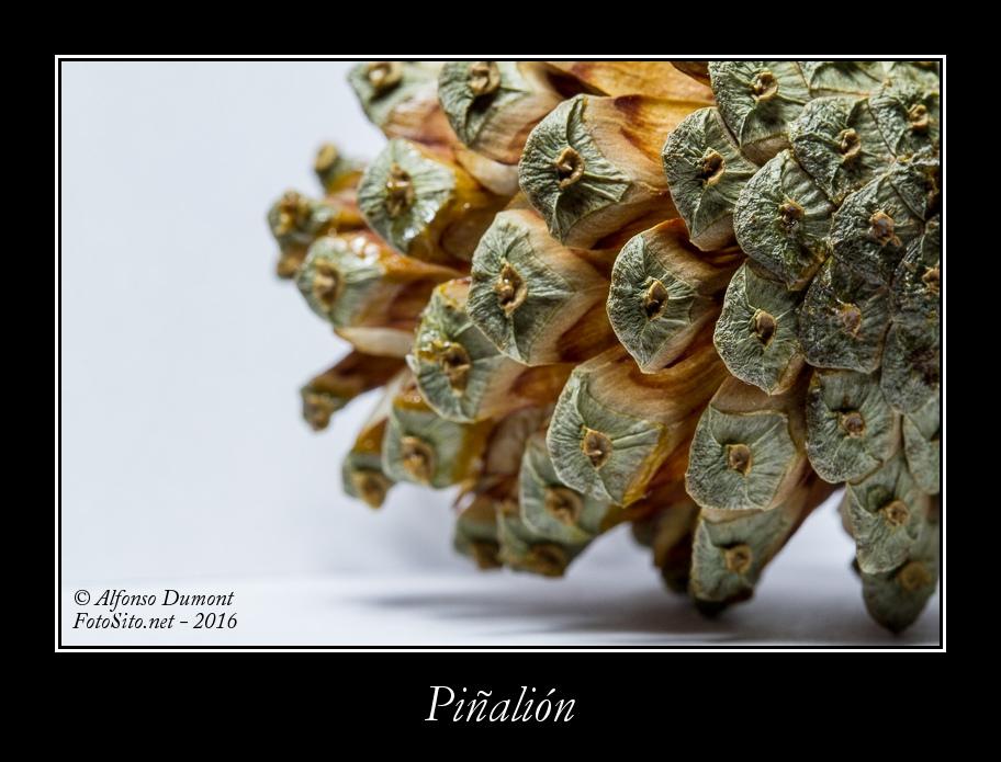 Pinalion