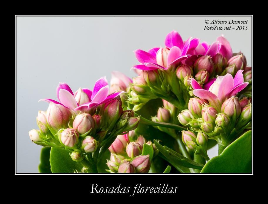 Rosadas florecillas