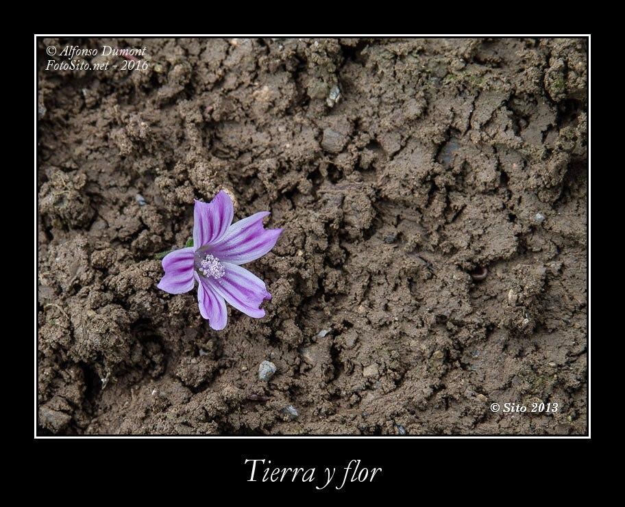Tierra y flor