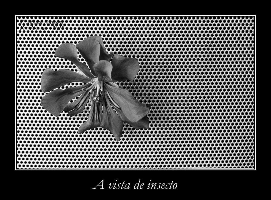 A vista de insecto