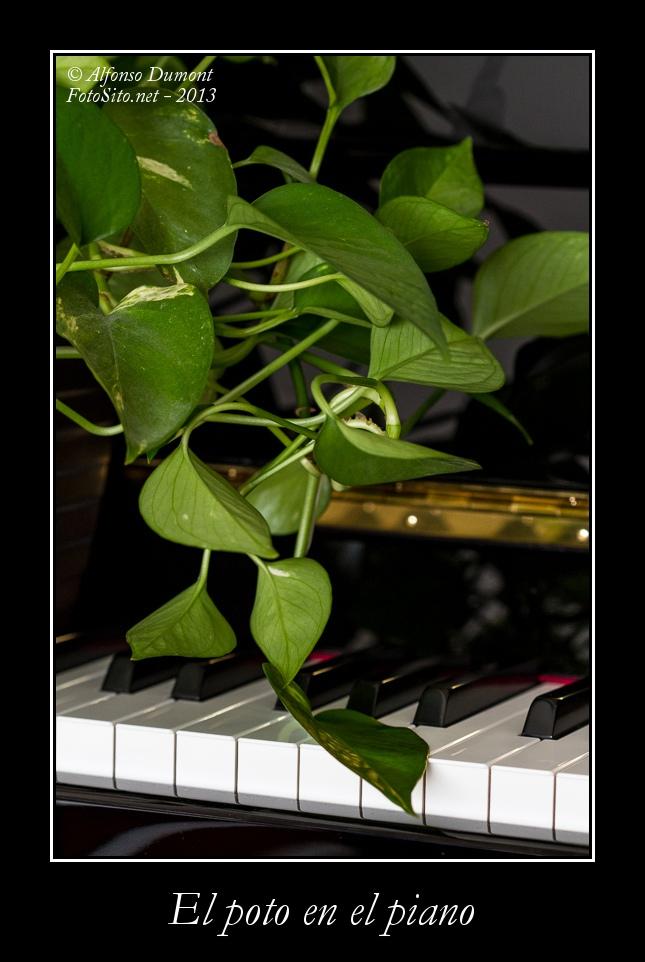 El poto en el piano
