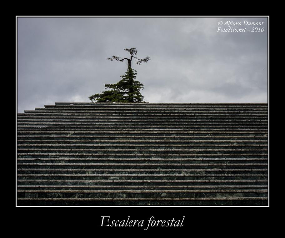Escalera forestal