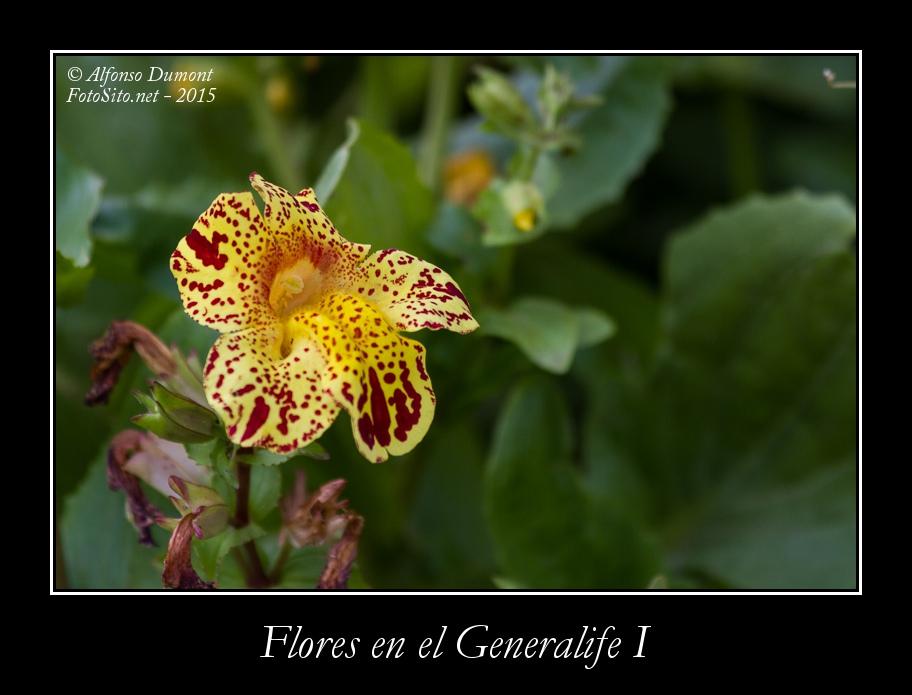 Flores en el Generalife I