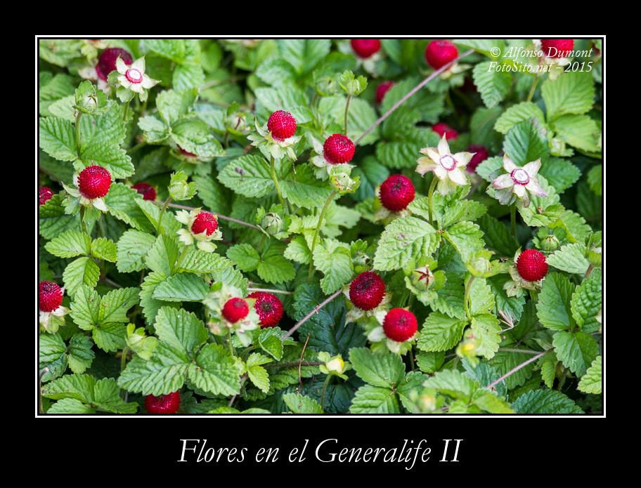 Flores en el Generalife II