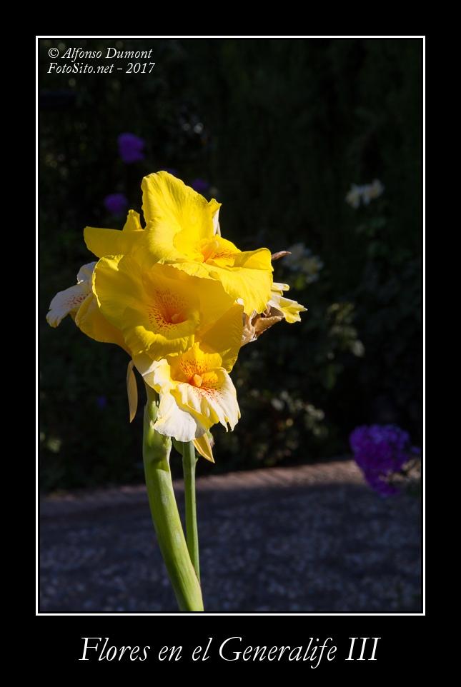 Flores en el Generalife III
