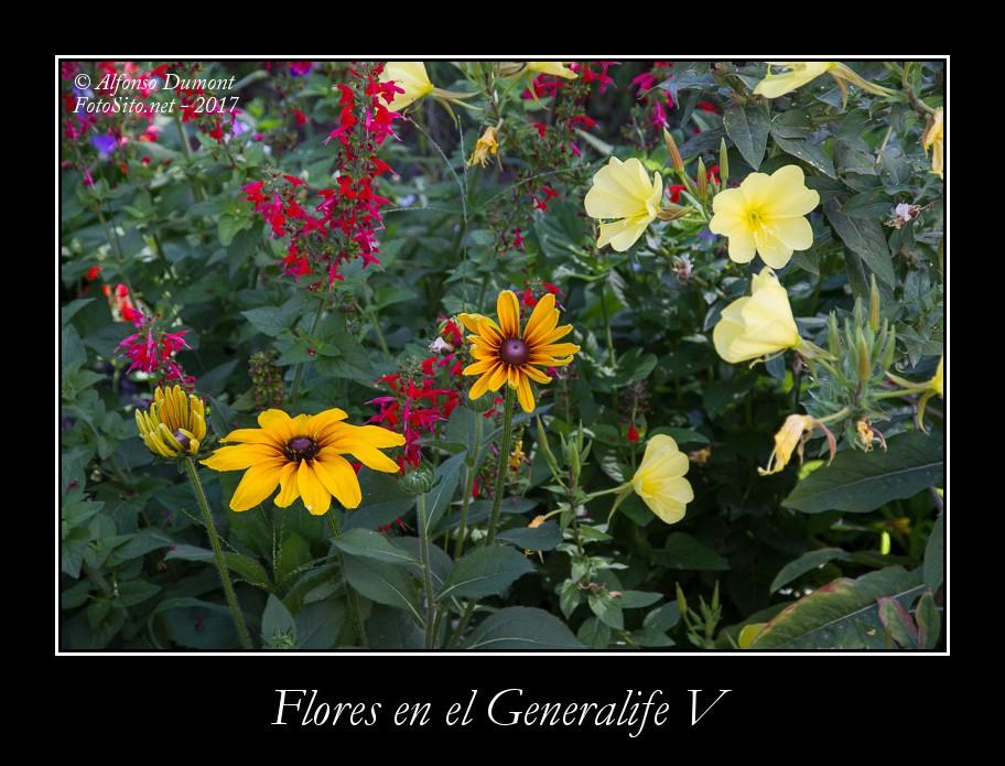 Flores en el Generalife V